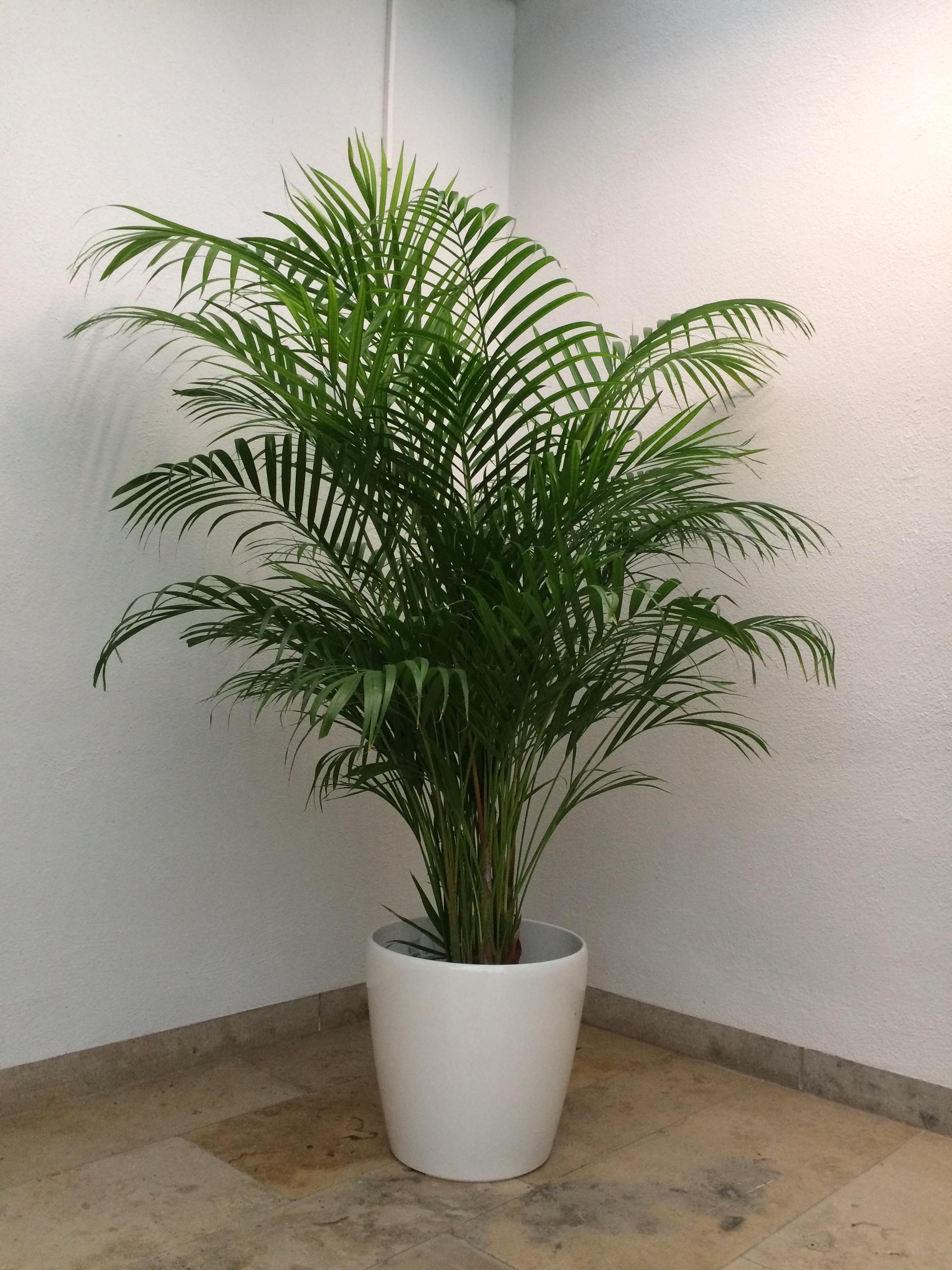 Lieblings Hydrokultur - Pflanzen   Decker Greenoffice &NP_67